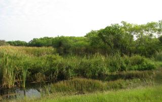 Filter Marsh Functional Assessment Method